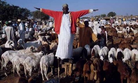 islam-zoofilia
